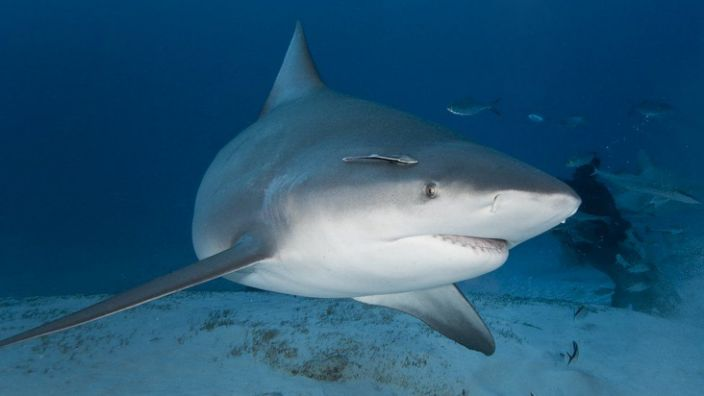 A bull shark is believed to have carried out the attack on Mr Eddy